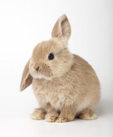 흰색 배경에 오렌지 토끼의 아기