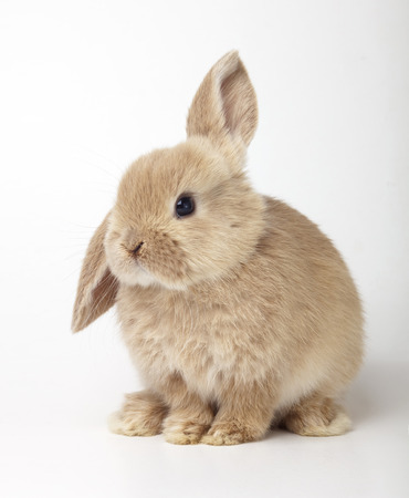 Bebé del conejo naranja sobre fondo blanco