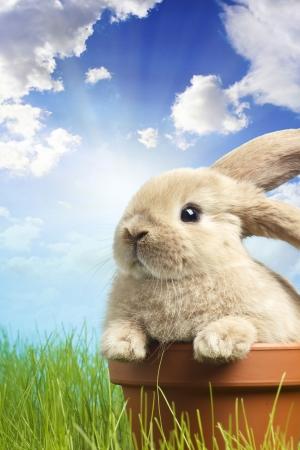 春の緑の芝生の上のイースターのウサギを赤ちゃん