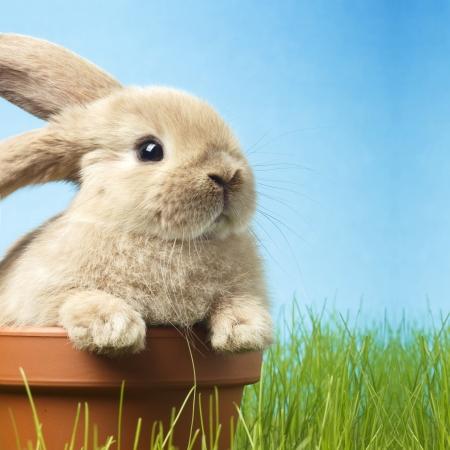 bebé conejo de Pascua en la primavera de la hierba verde