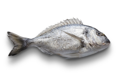 daurade: Dorado fish isolated on white background, with path