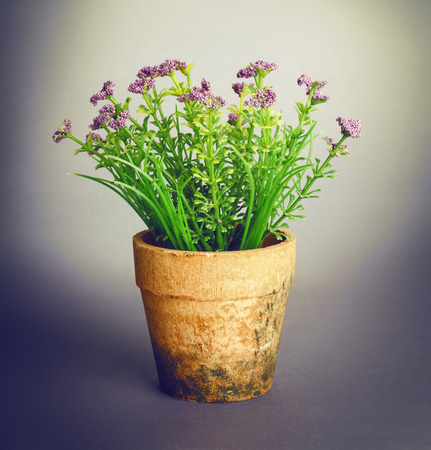 flower in pot on grey background photo
