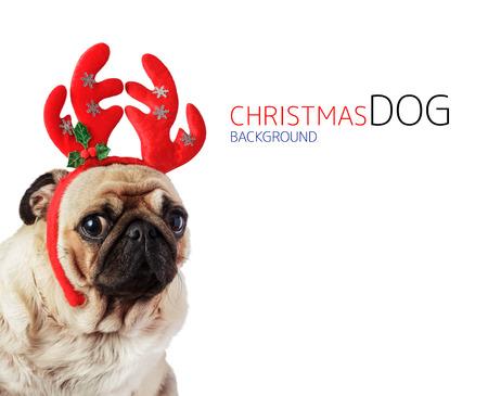 man's best friend: dog dressed up in reindeer antlers