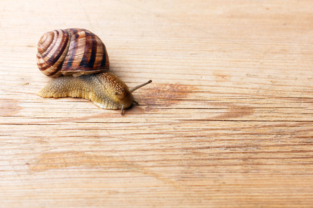slow: A close up of snail crawling over a piece of wood