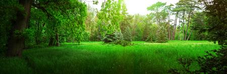 Spring Nature. Park met groen gras en bomen.