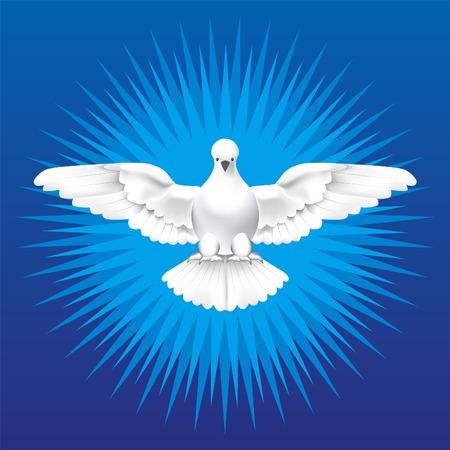 Espíritu Santo. paloma blanca como el Espíritu Santo. Ilustración de vector