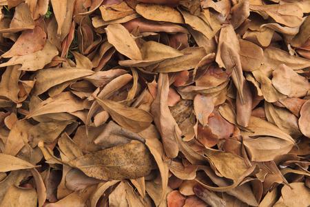 hojas secas: Hojas secas en el suelo