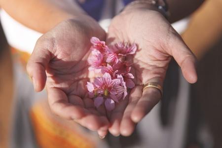 cerebrate: Cherry blossom flower on hand