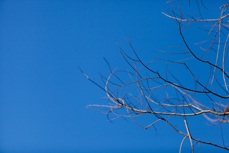 sky brunch: Dry brunch of tree with blue sky, Blur style. Stock Photo