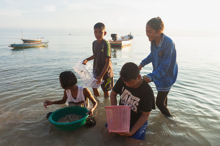 surat: SURAT THANI, THAILAND - MAY 31: Children looking for wedge shells on the beach on May 31,2015 in Koh Phangan, Surat Thani, Thailand.