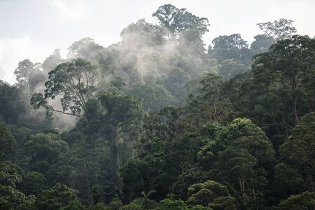 The Trees with fog after raining on the hill in tropical rain forest of Hala Bala wildlife sanctuary. Yala, Thailand.