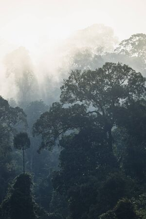 The Trees with fog after raining on the hill in tropical rain forest of Hala Bala wildlife sanctuary. Yala, Thailand. Stock Photo