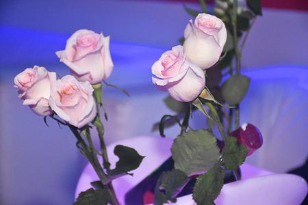 magentas: magentas roses