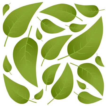 springtime: green leaves
