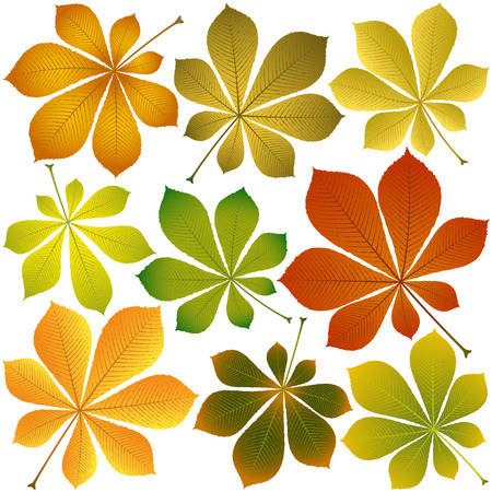 autumn chestnut leaves isolated on white background