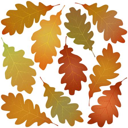 autumn oak leaves isolated on white background Illustration