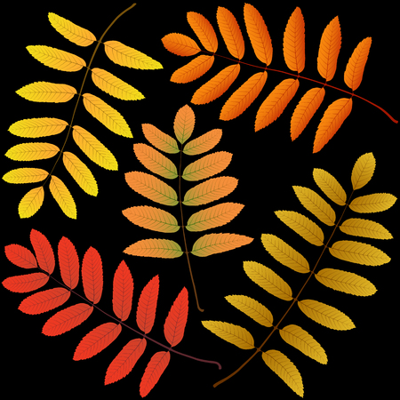 autumn leaves rowan black background