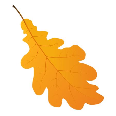autumn oak leaf