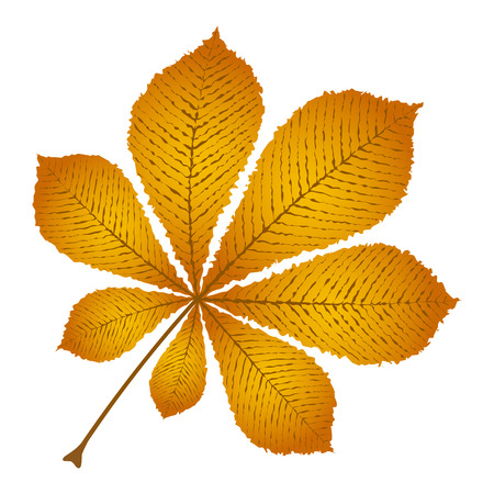 autumn leaf chestnut