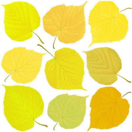 linden autumn leaves Illustration