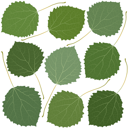 feuilles vertes trembles