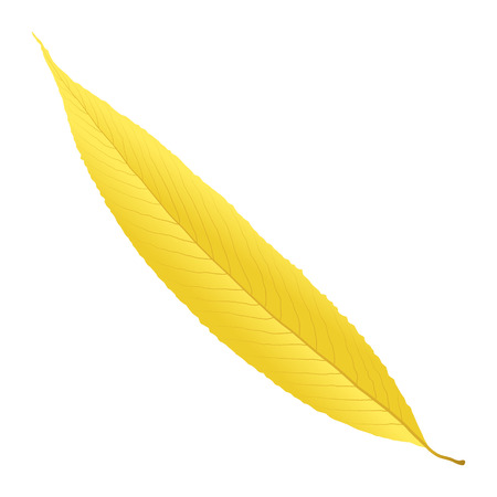 willow: yellow autumn leaf willow Illustration