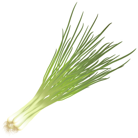 bunch: bunch green onions with roots