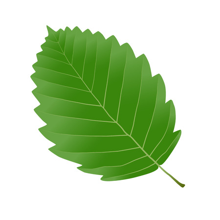 aliso hoja verde