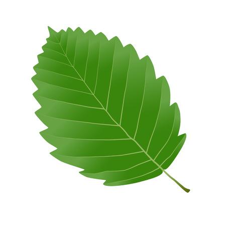 alder: green leaf alder