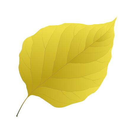 yellow leaf lilac