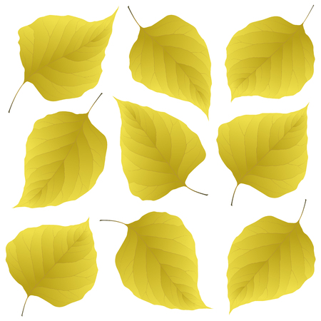 yellow leaves of lilac
