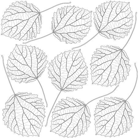 contoured: contoured aspen leaves