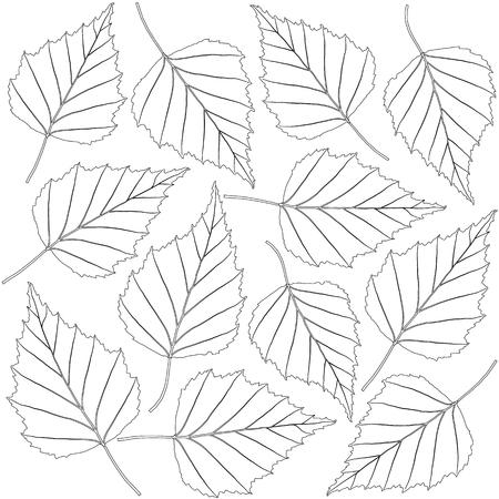 contoured: contoured birch leaves