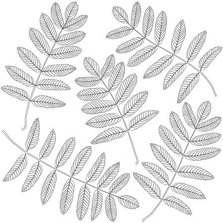 contoured: contoured rowan leaves