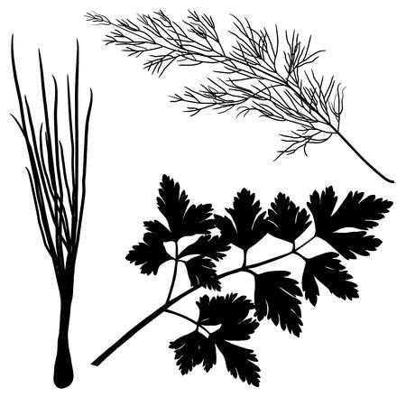 sylwetki koperek pietruszka cebula wyizolowanych na białym tle Ilustracje wektorowe