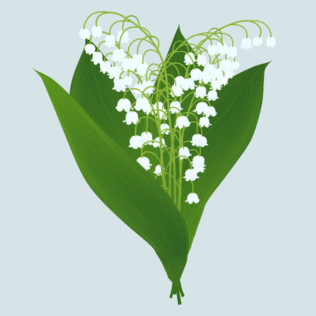lilies of the valley isolated on light background