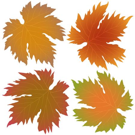 grape leaves: autumn grape leaves isolated on white background Illustration