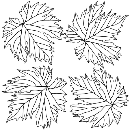 grape leaves: black and white grape leaves isolated on white background