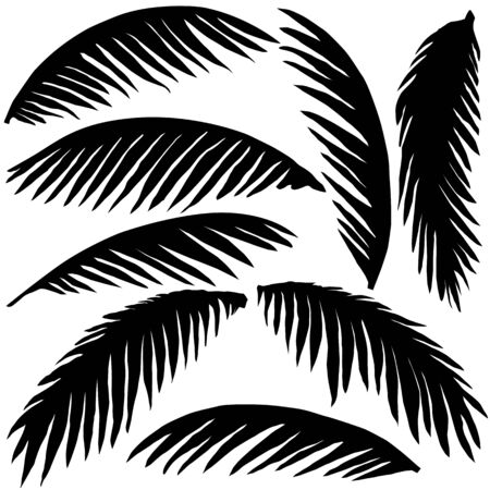 black palm leaves isolated on white background