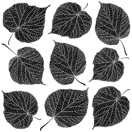 Linden leaves black and white isolated on white background