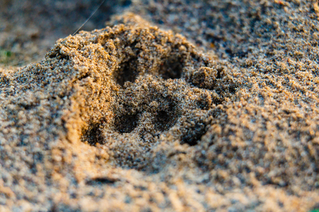 Animal footprint on sand close-up. At summer sunrise near the river