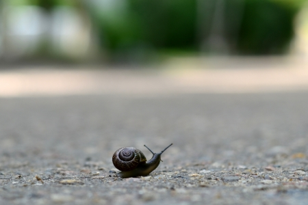 Snail traveling on the road photo