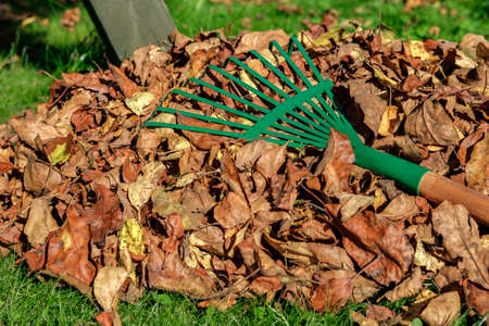 CLOSE UP: A metal green fan rake is lying on a pile with yellowed and withered autumn leaves.