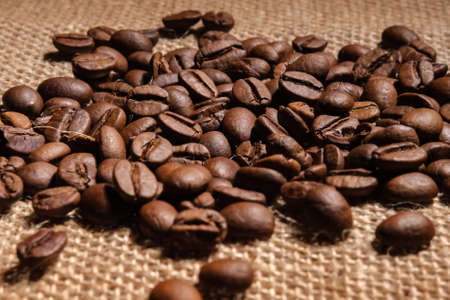 Large arabica coffee beans are scattered on a dense and rough burlap fabric that lies on the table, close-up.