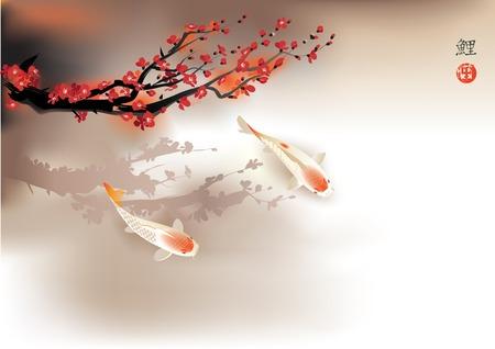 pez carpa: Ilustraci�n del vector del tradicional sagrado japon�s Koi peces carpa