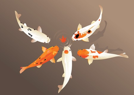 koi fish pond: Vector illustration of traditional sacred Japanese Koi carp fish Illustration