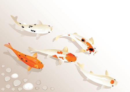 Vector illustration of traditional sacred Japanese Koi carp fish Stok Fotoğraf - 34218764