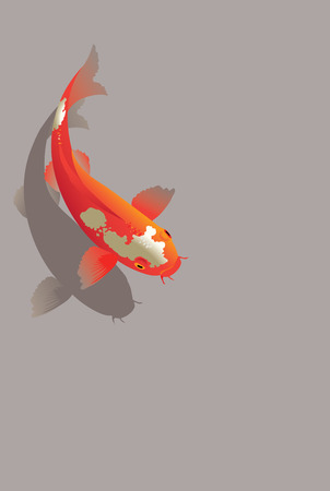 ponds: Vector illustration of traditional sacred Japanese Koi carp fish Illustration