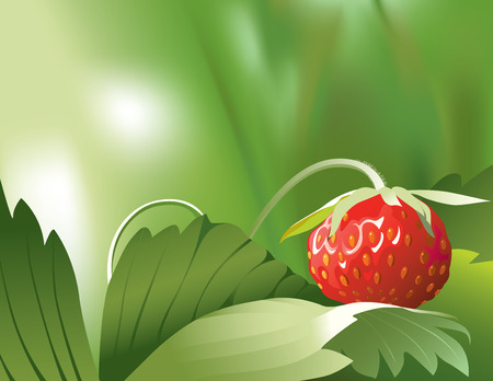 de focused: Vector illustration of ripe red strawberry on its plant in nature Illustration