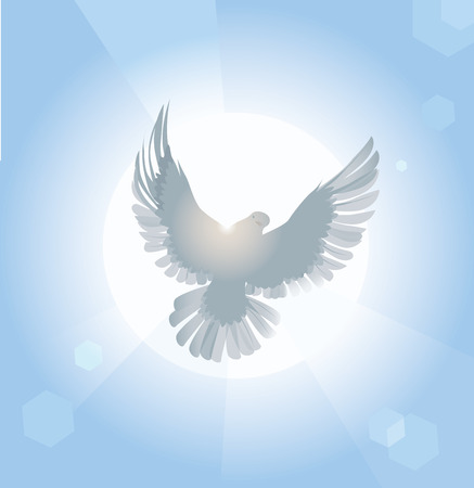 Vector illustration of white dove spreading wings in sunlight Illustration